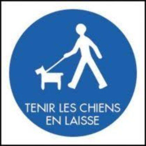 OBLIGATION DE TENIR SON CHIEN EN LAISSE SUR LE DOMAINE PUBLIC